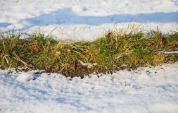 Green grass covered with first snow. Closeup. Photo can be used as a whole background Royalty Free Stock Images