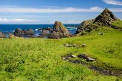 Irish beach, green grass covered field, sea side, horizon, wild rock formations, natural beauty. Green grass covered foreground and wild, beautiful rock stock photography