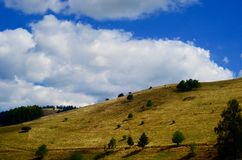 Green Grass Covered Mountain With Green Trees Under Blue Cloudy Skies Stock Photos