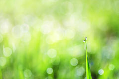 Green grass is covered with shiny drops of morning dew Royalty Free Stock Images