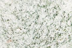 Green grass covered with snow. Beautiful background. Snow royalty free stock image
