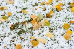 Green grass covered with snow and fallen yellow leaves. Autumnal colorful background, fall light and color. Of leaves. Seasons Stock Images