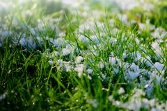 Green grass covered with snow. Sunshine on a green grass covered with snow Royalty Free Stock Image