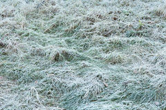 Green Grass Covered With Frost Stock Image