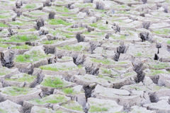 Green grass on cracked earth Stock Images