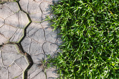 Green grass creeping to walkway Royalty Free Stock Image