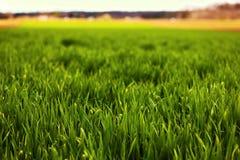 Green grass in Croatia. Green field in Croatia. Shallow DOF royalty free stock photos