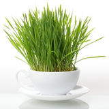 Green grass in cup isolated on white background. Raw food concep Stock Image