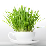 Green grass in cup isolated on white background. Raw food concep Stock Photography