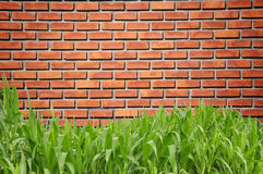 Green grass curve and brickwall Stock Photo