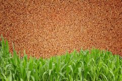 Green grass curve sand wall Royalty Free Stock Images