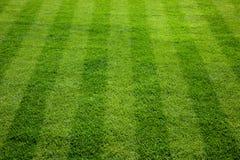 Green grass football field. Stock Image