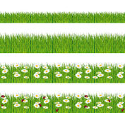 Green grass with daisies and ladybugs. Stock Photo
