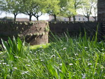 Green grass with daisies wit the fortification in background Stock Images