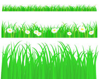 Green grass with daisy. Pattern on white background Stock Photos