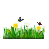 Green Grass with dandelion Vector Illustration Stock Photo
