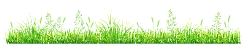 Green grass with dandelions. And spikelets on white background Stock Photos