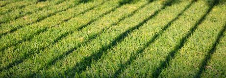 Green grass with dark shadow of fence. Blank backdrop, close up view with details, banner. Green grass with dark shadow of banisters. Empty background, close up Stock Image