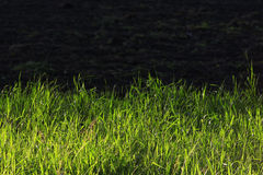 Green grass with dark soil Royalty Free Stock Photos