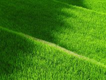 Green Grass during Day Time Stock Images