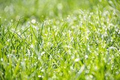 Green Grass during Daytime Close Up Shot Photography Royalty Free Stock Photography