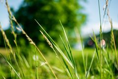 Green Grass during Daytime in Focus Photography Royalty Free Stock Photos