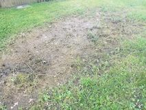 Green grass with dead brown grass where water pooled. From a flood Royalty Free Stock Images