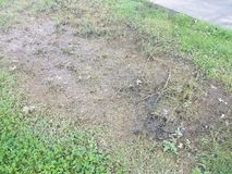 Green grass with dead brown grass where water pooled. From a flood Stock Photo