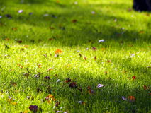 Green grass with dead leaves Royalty Free Stock Photography