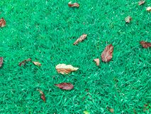 Green grass and decayed leaves fall down on the ground,. Lots of leaves for natural backgrounds and wallpapers royalty free stock image