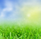 Green grass and defocused sky Royalty Free Stock Images