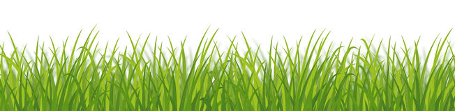 Green grass dense Stock Photo