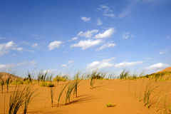 Green grass in the desert Royalty Free Stock Image