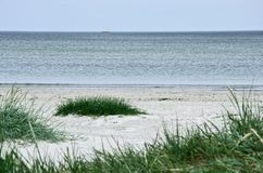 Green grass on a deserted beach Stock Image