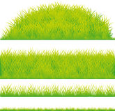 Green grass design element - vector Stock Image