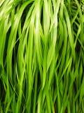 Green grass detail Stock Photos