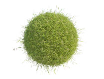 Green Grass Detailed Close Up Royalty Free Stock Photos