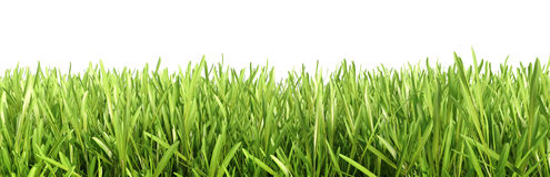 Green grass detailed close up Royalty Free Stock Photography