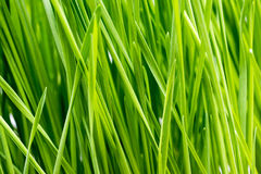 Green Grass Details Stock Photos