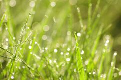 Green grass in a dew Stock Photo