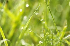 Green grass in a dew Royalty Free Stock Images