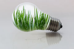 Green grass with  dew drop in light bulb Royalty Free Stock Image