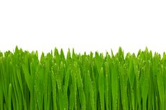 Green grass with dew drops. Stock Photography