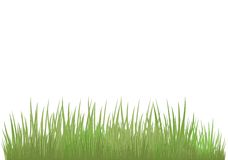 Green grass of different shade. S on a white background. It is very convenient to use this picture for a background or in your collage Stock Image