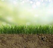 Green grass in the dirt Stock Photos