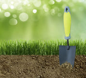 Green grass in the dirt Royalty Free Stock Photo