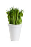 Green grass and Disposable cup Stock Photography