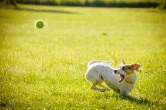 Green, Grass, Dog Breed, Grassland royalty free stock photos