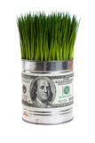 Green grass and dollar Stock Photos