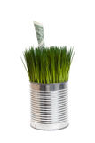 Green grass and dollar Stock Photography